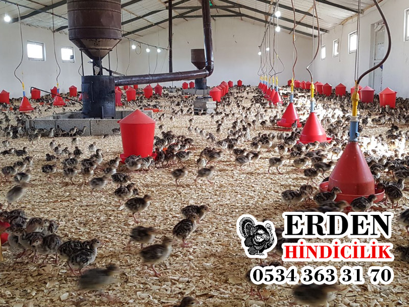 Diyarbakır Hindi Çiftliği Erden Hindicilik Üretim ve Toptan Satış Merkezi